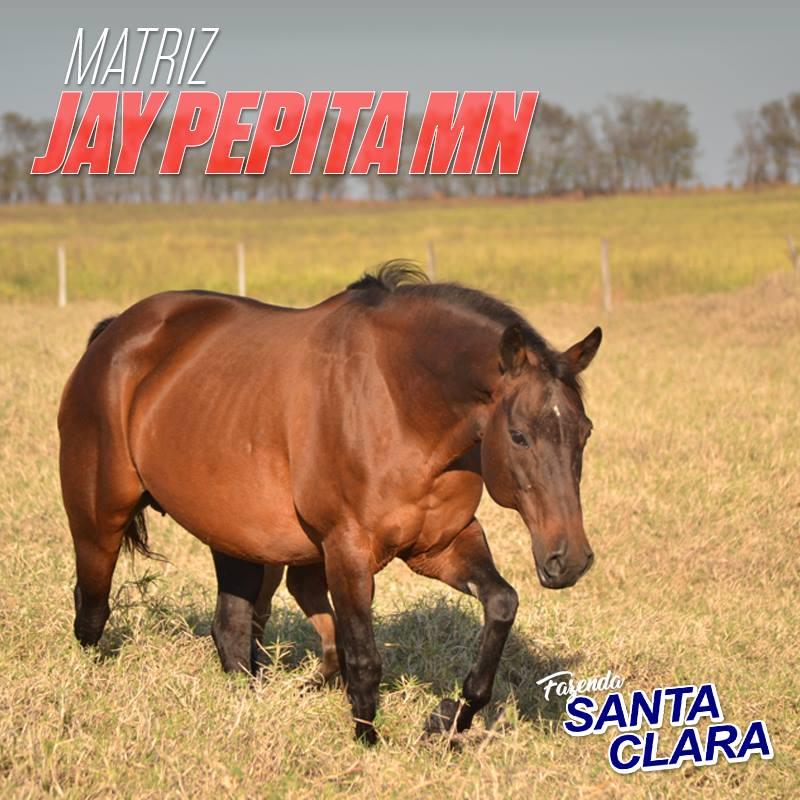 Jay Pepita MN