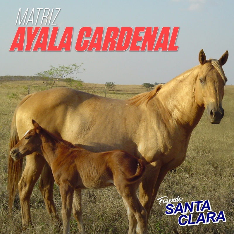 Ayala Cardenal